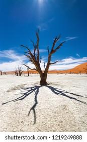 Dead Camelthorn Trees against blue sky in Deadvlei, Sossusvlei. Namib-Naukluft National Park, Namibia, Africa.