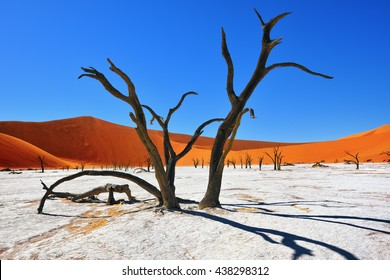 Dead Camelthorn Trees against red dunes and blue sky in Deadvlei, Sossusvlei. Namib-Naukluft National Park, Namibia, Africa. Most beautiful place in Namibia