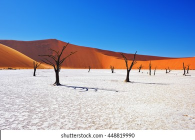 Dead Camelthorn Trees against red dunes and blue sky in Deadvlei, Sossusvlei. Namib-Naukluft National Park, Namibia, Africa