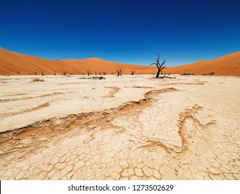 Dead Camelthorn trees and Cracked ground against red dunes and blue sky in Deadvlei, salt pan Sossusvlei. 450 year old dead trees. Namib-Naukluft National Park, Namibia, Africa