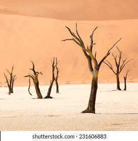 Dead Camelthorn Trees, Deadvlei, Namib-Naukluft National Park, Namibia