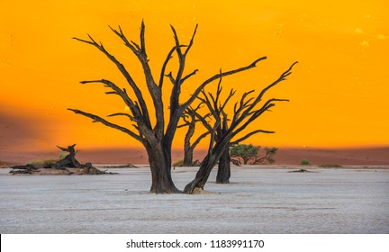 Dead Camelthorn Trees and red dunes in Deadvlei, Sossusvlei, Namib-Naukluft National Park, Namibia