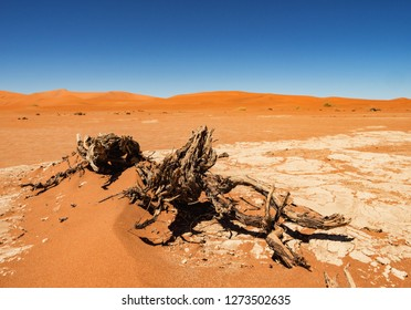 Dead Camelthorn trees and roots against red dunes and blue sky in Deadvlei, salt pan Sossusvlei. Namib-Naukluft National Park, Namibia, Africa