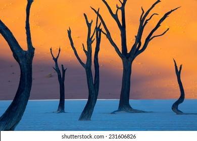 Dead Camelthorn Trees at sunrise, Deadvlei, Namib-Naukluft National Park, Namibia