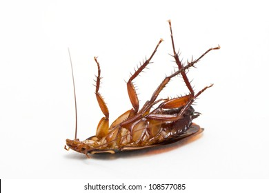 Dead cockroach isolated on a white background.