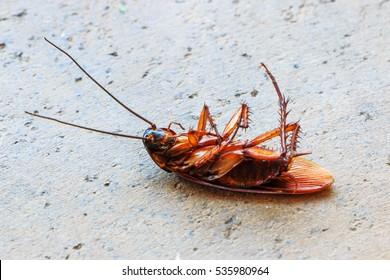 Dead cockroach on cement floor.