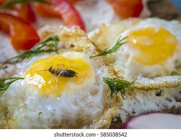 A dead cockroach in scrambled eggs.