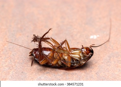 Dead cockroach turn face up on floor.
