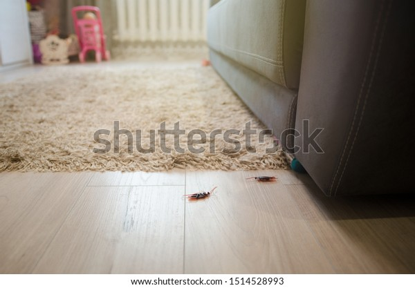 Dead Cockroaches Apartment House On Background Stock Photo Edit