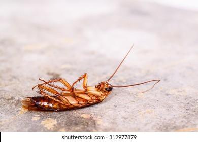 Dead cockroaches on floor