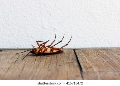 Dead cockroaches on wooden table