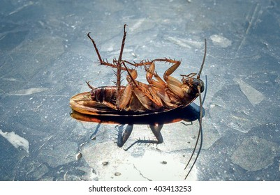 Dead cockroaches in the sun on the marble floor, Healthcare concept