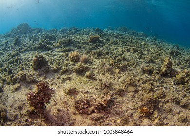 Dead coral reef