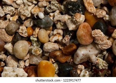 Dead corals and pebbles on Mirissa beach, Sri Lanka