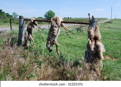Dead Coyote Fence