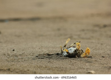 Dead Crabs Stranded in the Sand