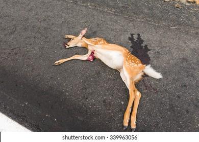 dead dear on the asphalt road hit by a car.
