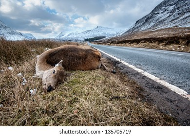 Dead deer by the side of road after a car crash