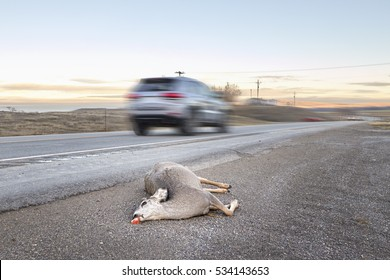 Dead deer hit by a car lying by the road with motion blurred vehicle, U.S. Highway 14, Wyoming, USA.
