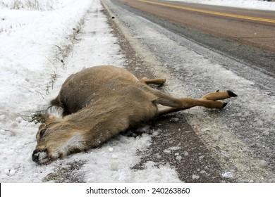 Dead deer lying on the winter highway after a car crash, soft focus