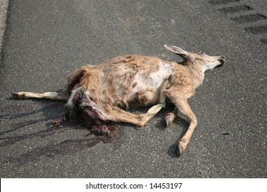 Dead deer on the side of a road