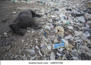 Dead dog by garbage