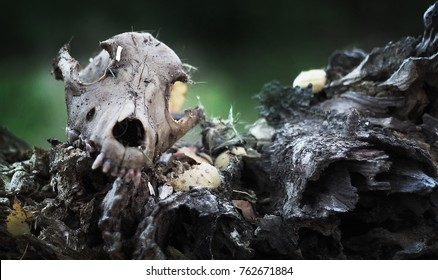 dead dog skull in the forest, scary frightening nightmare background