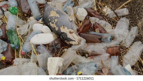 Dead dolphin. Ecological catastrophes, animals die due to poisoning of plastic garbage and human waste due to an environmental disaster.