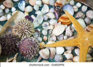 Dead Dried Fishes and Seashells