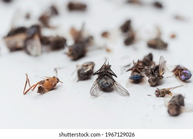 Dead dried insects from a night light lamp on a white background. Flies, cockroaches, beetles and wasps on a white background. Texture of dried flying insects