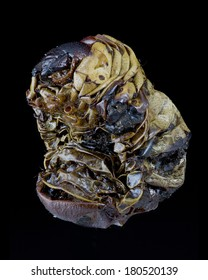 dead, dried out and shrivelled Megasoma mars beetle grub isolated on black background