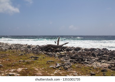 Dead driftwood on the rough estern shore od the tropical island bonaire in the caribbean