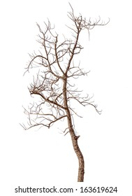 Dead and Dry Tree Isolated in White Background
