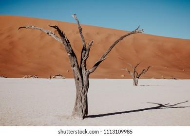 Dead dry trees on the desert in Namibia
