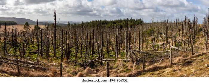 dead and dying trees in the forest global warming issues