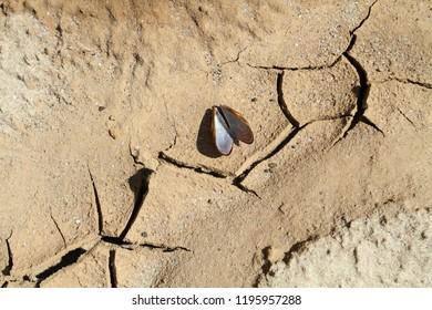 Dead empty shell on cracked earth shore