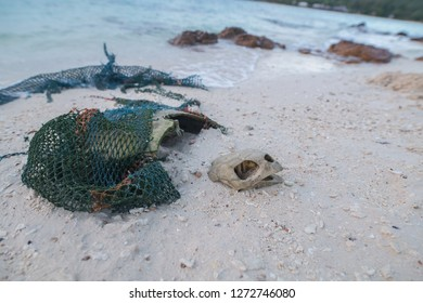Dead endangered sea turtle on beach with fishing net wrapped around it