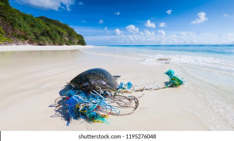 Dead endangered sea turtle shell washed up on  beach with fishing net wrapped around it
