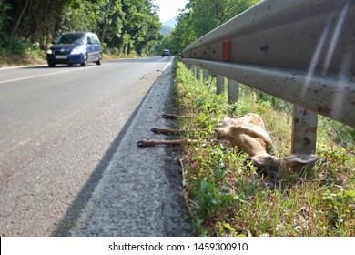 Dead European roe deer (Capreolus capreolus) at the edge of the road. Car and wild animal accident concept.