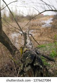 Dead fallen tree on a marshland background. Dry grass and bushes create an atmosphere of gloom. Peaceful gloomy mood. The concept of the inevitability of withering and death. Moody landscape.