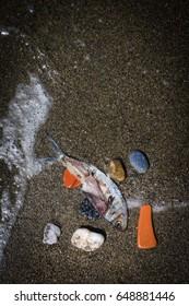 Dead fish in a beach