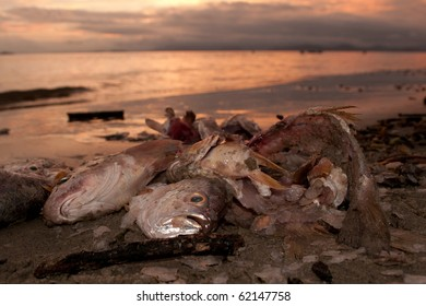 Dead fish at the beach after some environmental disaster, sunset time.