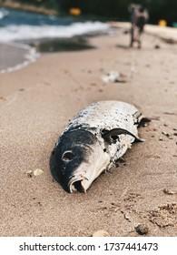 poissons morts au bord de la mer