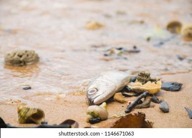 dead fish on the beach. sea pollution concept.