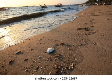 Dead fish on the beach , dead wild fish in polluted water at sea, nature series