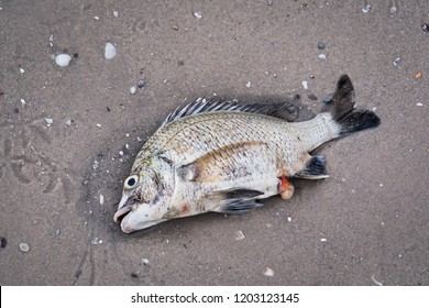 dead fish on the floor or by the beach, sea, lake, river by natural cause or pollution or human act.