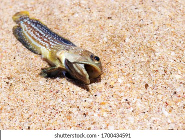 dead fish on a sandy beach. the concept of environmental pollution
