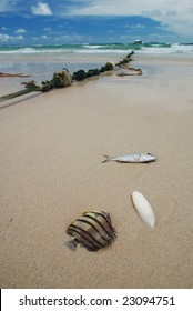 Dead fish on a tropical beach