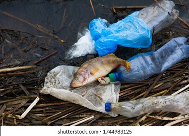 dead fish with plastic trash on the ocean. Concept for the protection of marine life and oceans. Terrible environmental problems with terrible consequences. Unbreakable trash kills the ocean