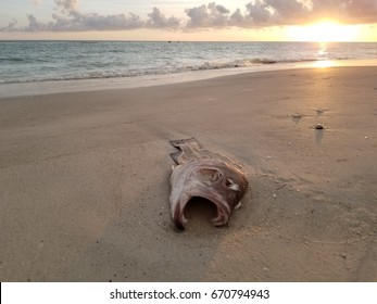 Dead Fish Sunset